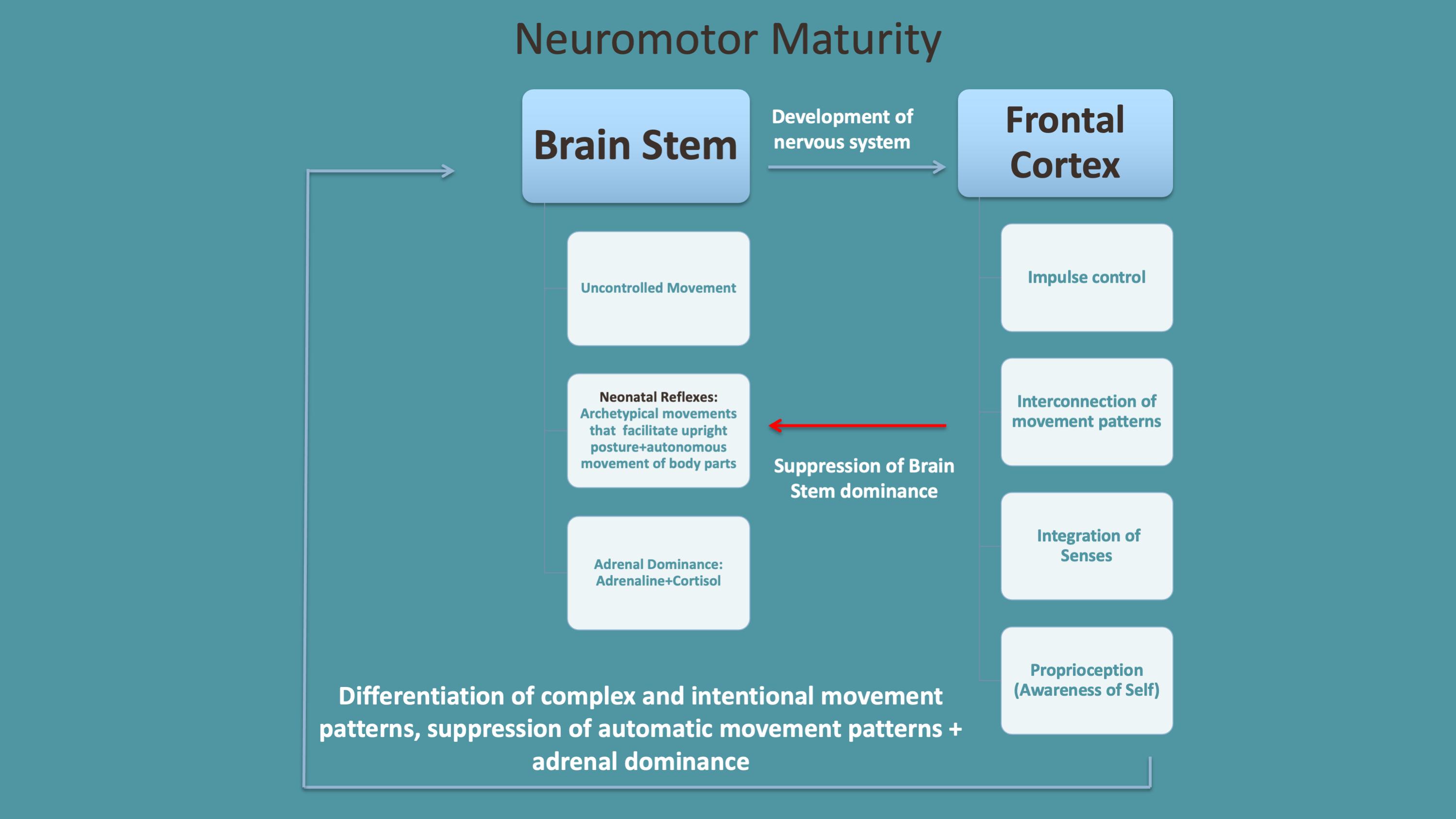 Neuromotor Maturity